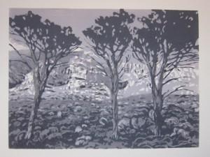 Pines at Platteklip