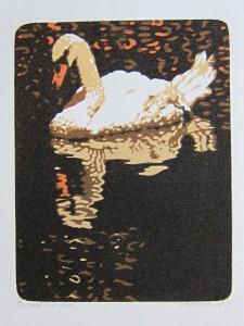 Donker water swan